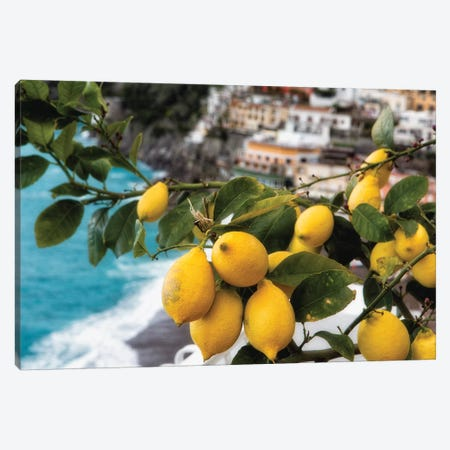 Close Up View of a Lemon Tree with Fruit, Positano, Amalfi Coast, Campania, Italy Canvas Print #GOZ44} by George Oze Canvas Art