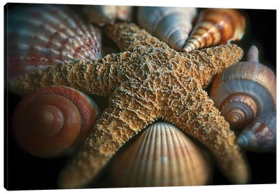 Close up View of a Starfish with Various Seashells Canvas Art Print