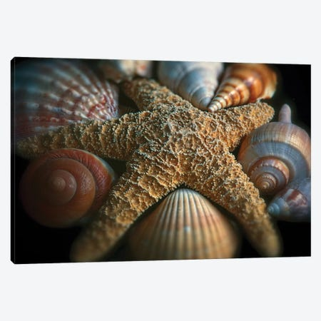 Close up View of a Starfish with Various Seashells Canvas Print #GOZ46} by George Oze Canvas Art