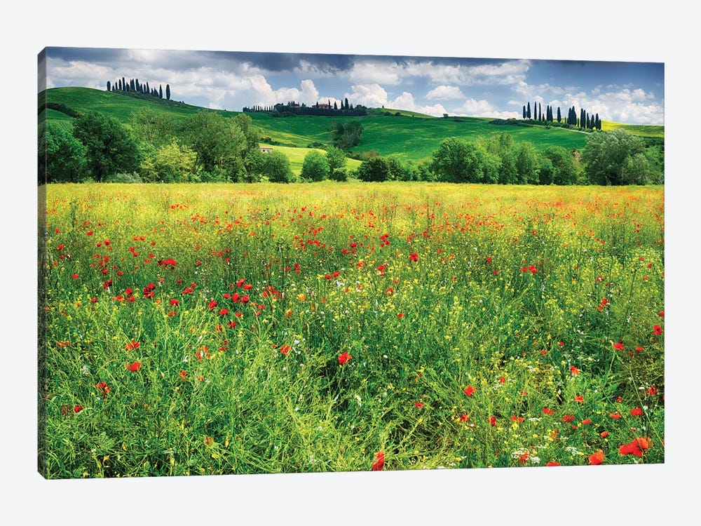Spring Meadow, Pienza, Val D'Orcia, Tuscany, Italy by George Oze 1-piece Canvas Art Print