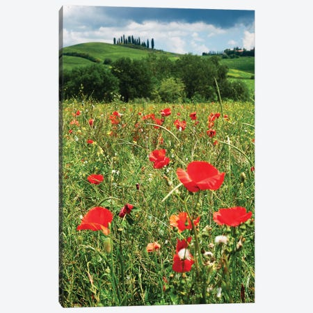 Close Up View Of Red Poppies In A Field, Tuscany, Italy Canvas Print #GOZ473} by George Oze Canvas Art