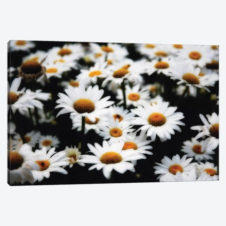 Dreamy Daisies Canvas Print #GOZ70} by George Oze Canvas Art