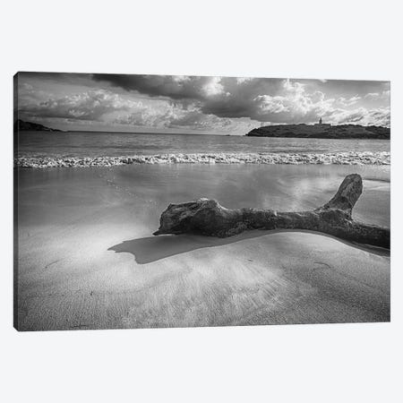 Driftwood on a  Beach, Playa Sucia, Cabo Rojo, Puerto Rico Canvas Print #GOZ71} by George Oze Canvas Art