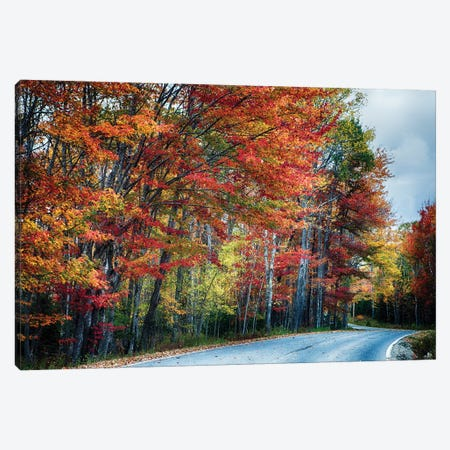 Fall Scxenic Road in Acadia, Maine Canvas Print #GOZ78} by George Oze Canvas Wall Art