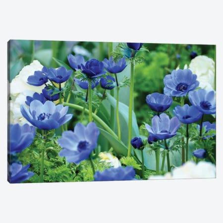 Vibrant Blue Hues Canvas Print #GPE49} by Gail Peck Canvas Print