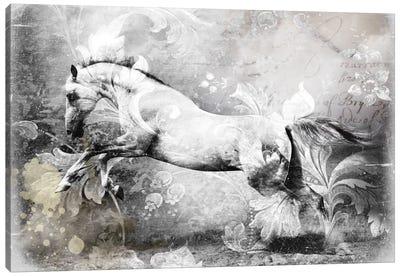 White Horse Canvas Print #GPH100