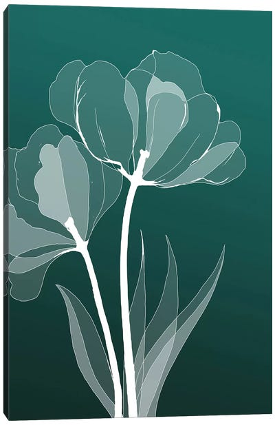 X-Ray Flowers III Canvas Print #GPH106