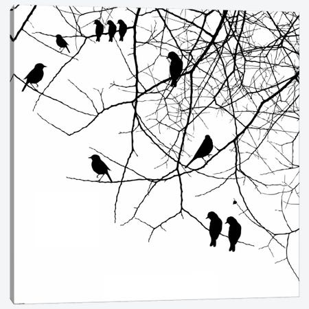 Birds II Canvas Print #GPH13} by GraphINC Canvas Art Print