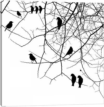 Birds II Canvas Print #GPH13
