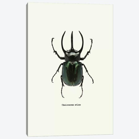 Chalcosoma Atlas Canvas Print #GPH51} by GraphINC Art Print