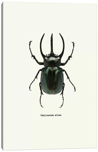 Chalcosoma Atlas Canvas Art Print