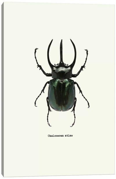 Chalcosoma Atlas Canvas Art Print