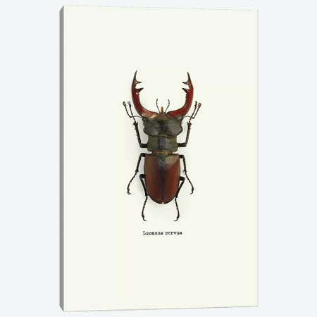 Lucanus Cervus Canvas Print #GPH54} by GraphINC Canvas Wall Art