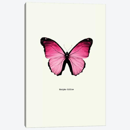 Morpho Didius Canvas Print #GPH55} by GraphINC Canvas Art