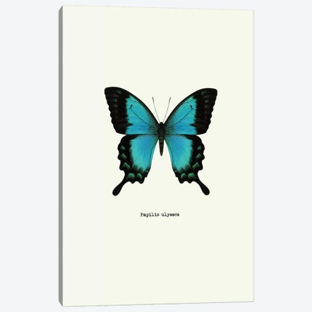 Papilio Ulysses Canvas Print #GPH56} by GraphINC Canvas Artwork