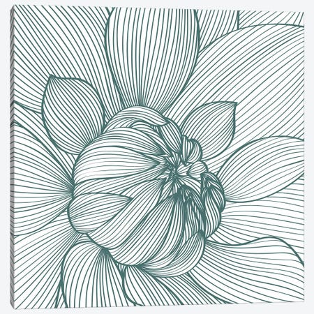 Myrrhis Odorata I Canvas Print #GPH69} by GraphINC Canvas Art