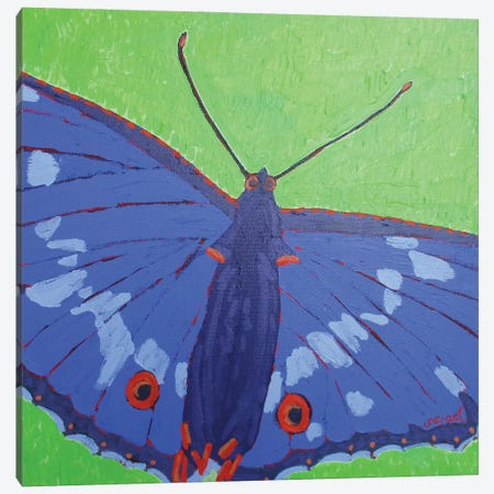 Butterfly II Canvas Print #GRA18} by Sue Graef Canvas Print