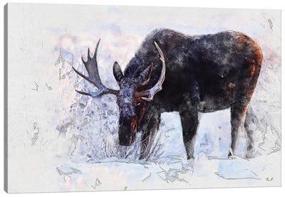 Moose I Canvas Art Print