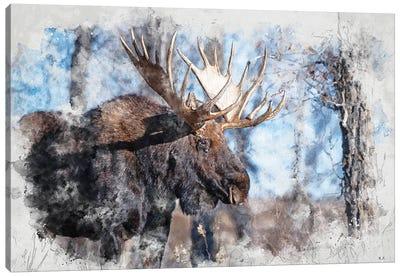 Moose II Canvas Art Print