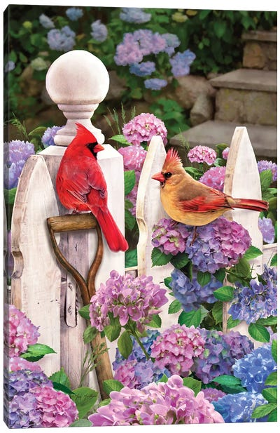 Cardinals On Fence W-Hydrangea Canvas Art Print