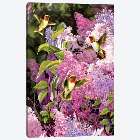 Humingbirds And Lilac Canvas Print #GRC27} by Greg & Company Canvas Art Print