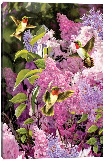 Humingbirds And Lilac Canvas Art Print