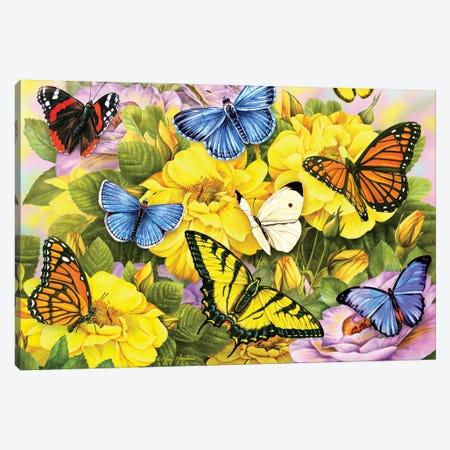 Multi Colored Butterflies Canvas Print #GRC31} by Greg & Company Art Print
