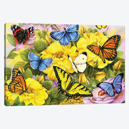 Multi Colored Butterflies Canvas Print #GRC31} by Greg & Company Art Print