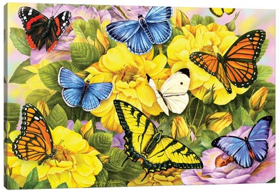 Multi Colored Butterflies Canvas Art Print