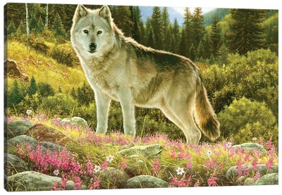 Summer Wolf Canvas Art Print