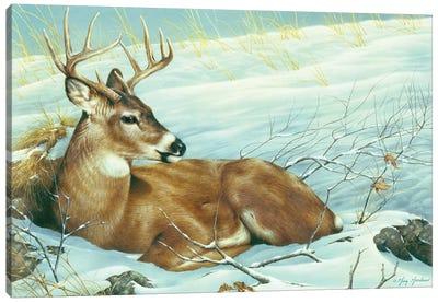 Afternoon Siesta Canvas Art Print