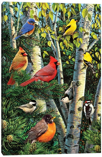 Birds In Birch & Pines Canvas Art Print