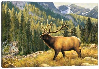 Mountain Majesty-Elk Canvas Art Print