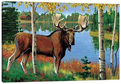 Moose At Lake Canvas Art Print