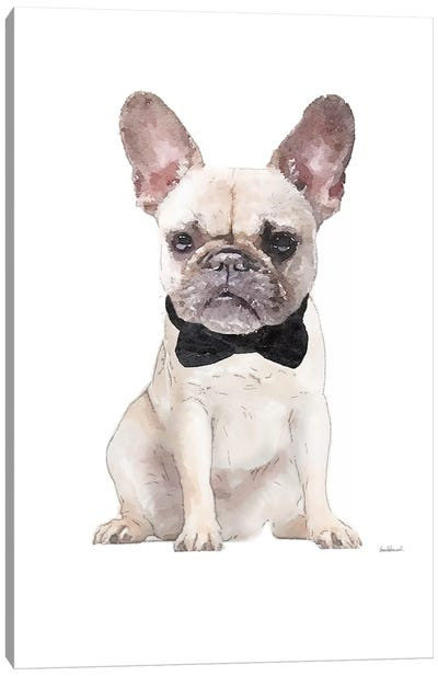 Cream Frenchie Canvas Art Print