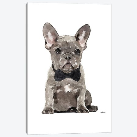 Gray Frenchie Canvas Print #GRE258} by Amanda Greenwood Canvas Artwork