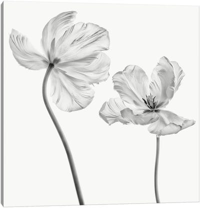 Same Tulip : Front- And Backview Canvas Art Print