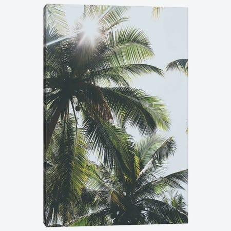 Palm Trees in the Philippines Canvas Print #GRM121} by Luke Anthony Gram Art Print