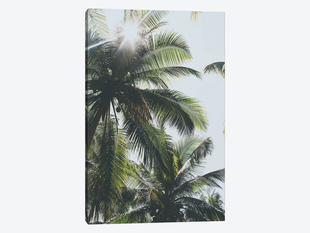 Palm Trees in the Philippines by Luke Anthony Gram 1-piece Canvas Artwork