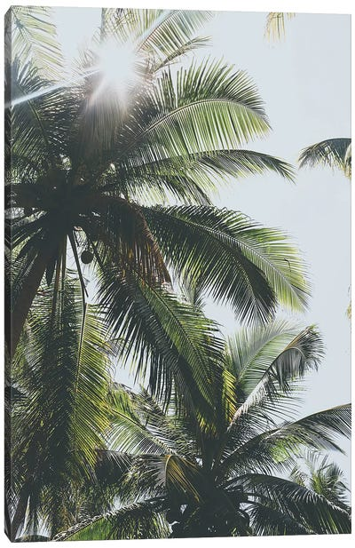 Palm Trees in the Philippines Canvas Art Print
