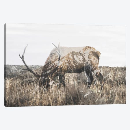 Within Nature II Canvas Print #GRM148} by Luke Anthony Gram Art Print