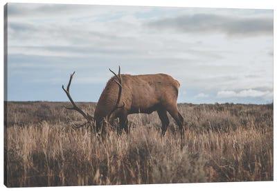 Wyoming, USA Canvas Art Print