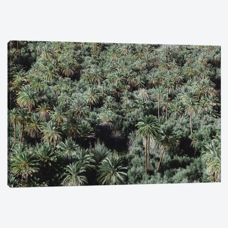 Palm Trees, Morocco Canvas Print #GRM179} by Luke Anthony Gram Canvas Wall Art