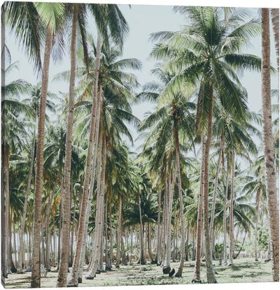 Palm Trees, Philippines Canvas Art Print