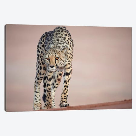 Grumpy Lady! Canvas Print #GRT1} by Martin Groth Art Print