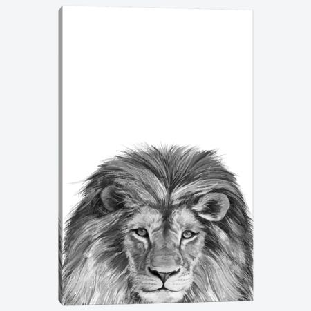 Lion Canvas Print #GRV20} by Laura Graves Art Print