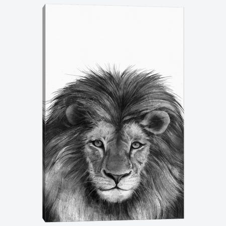 Lion II Canvas Print #GRV44} by Laura Graves Canvas Art