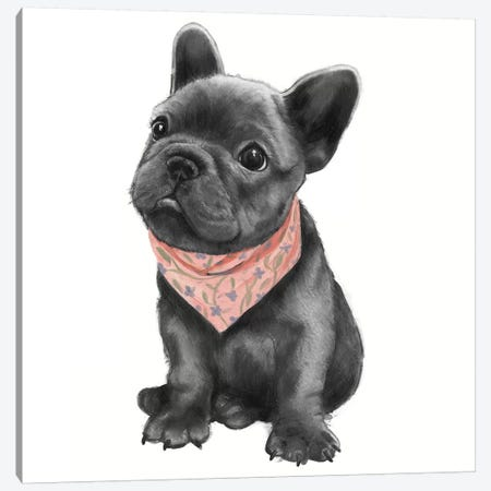 Parlez-Vous Frenchie Canvas Print #GRV52} by Laura Graves Canvas Artwork
