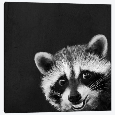 Raccoon Canvas Print #GRV53} by Laura Graves Canvas Wall Art