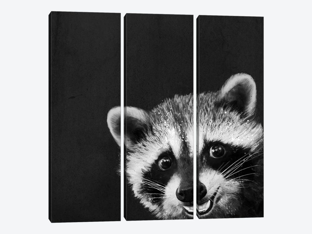 Raccoon by Laura Graves 3-piece Canvas Wall Art